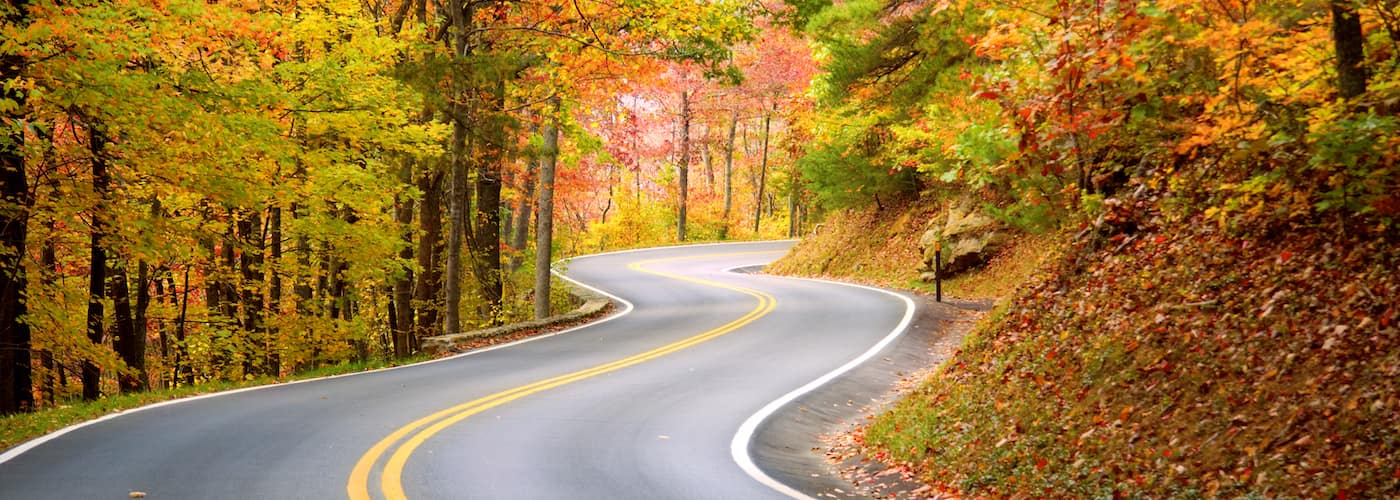 winding road under fall trees